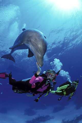 scuba-divers-swim-with-dolphin