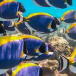 colourful-coral-fishes