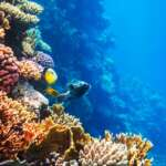 coral-fish-on-reef