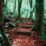trekking-trail-leading-through-jungle